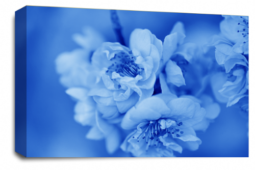 Floral Flower Wall Art Picture Blue White Spring Blossom Print